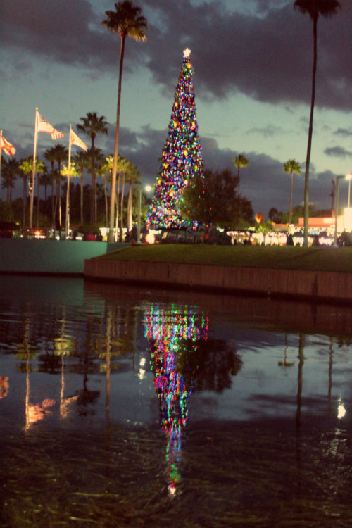 Hollywood Studios Reflection – #276